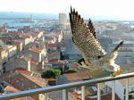 Cohab, des solutions pour favoriser la biodiversité en ville