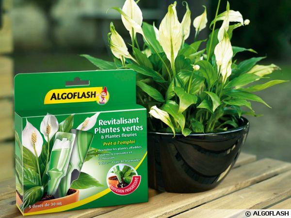 Une v ritable cure de beaut pour toutes les plantes d for Toutes les plantes