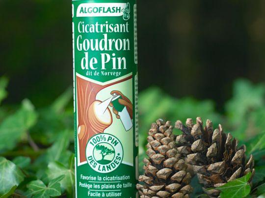 Cicatrisant goudron de pin une barri re traditionnelle facile utiliser - Goudron de pin ...