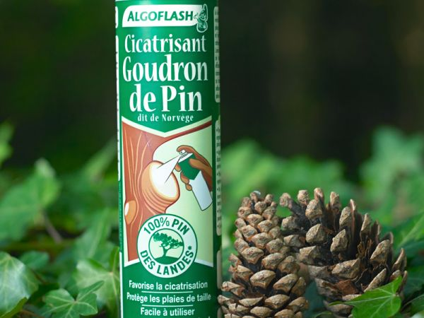 Cicatrisant goudron de pin une barri re traditionnelle - Goudron de pin ...