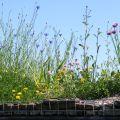 Construire soi-même un toit végétalisé: c'est possible !