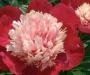 Le vaudreuil (27, Eure), salon fleurs et jardins