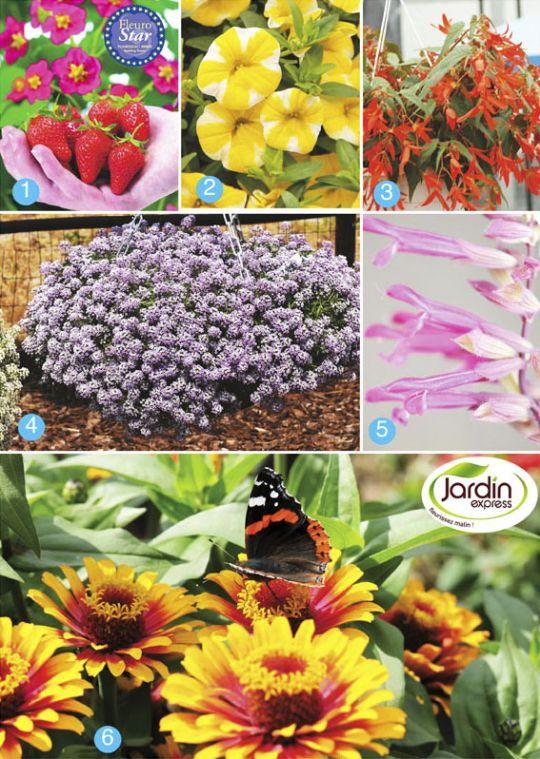 Nouveaut s printemps 2013 jardin express for Jardin express