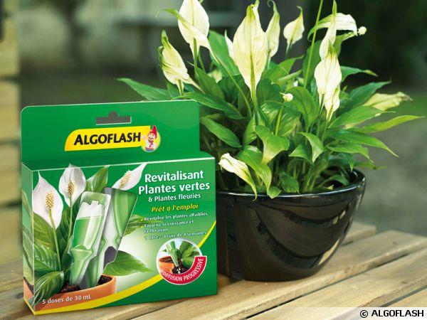 Nouvelle dose revitalisante pour plantes vertes et fleuries for Plantes vertes en ligne