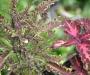 Les plantes � feuillage : un �veil des sens au c�ur des balcons et jardins