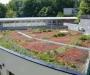Toitures végétales; la nature sur les toits
