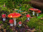 Les symptômes d'intoxications aux champignons