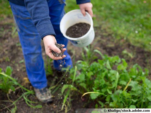 Fertiliser les plantes du jardin avec des granulés bio
