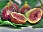 Pas de figues sans guêpes
