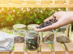 Comment bien conserver ses graines?