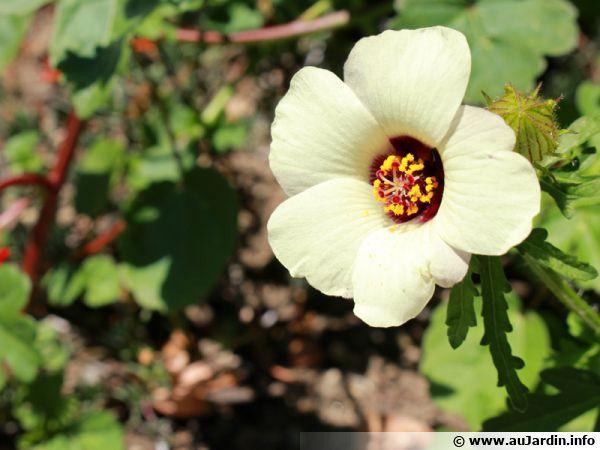 site de rencontre fleur d afrique