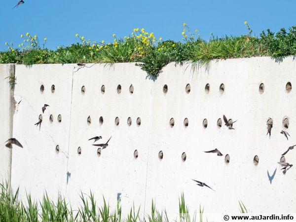Aider les hirondelles en installant des nids
