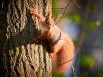 Accueillir les écureuils dans son jardin