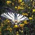 Visite th�matique : Les petites b�tes de nos jardins au Domaine du Rayol