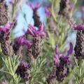 ATELIERS & FORMATIONS - G�rer son stress par l'aromath�rapie au Domaine du Rayol