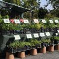 Week-end jardin-Portes Ouvertes HORTIFLOR BUREAU