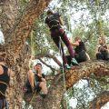 Grimpez dans les arbres au Domaine du Rayol