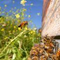 """Exposition """"Le peuple des abeilles"""""""