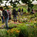 22eme Fête des Plantes de Jardins Fruités