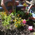 Stage « Jardiner sans dépenser » à Terre vivante