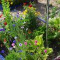 Stage « Osons les fleurs au jardin » à Terre vivante