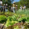Visite guidée des jardins de Terre vivante
