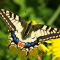 Sortie famille - la pollinisation