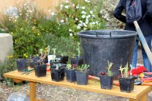 ATELIERS & FORMATIONS - Le b.a.-ba du jardinage - Domaine du Rayol
