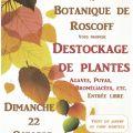 Automne au jardin : destockage de plantes