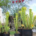 Chloroph'îles, la fête des plantes