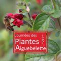 Journées des Plantes au Lac d'Aiguebelette