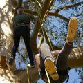 Grimpez dans les arbres !