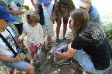 Activité famille : Les petites bêtes de nos jardins