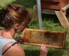"""Stage Terre vivante d'apiculture : """"Elevage de reines"""""""