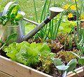 10èmes vies de jardin