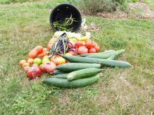 Se former au jardinage au naturel