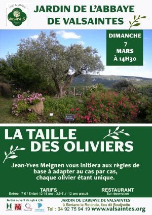 La taille des oliviers