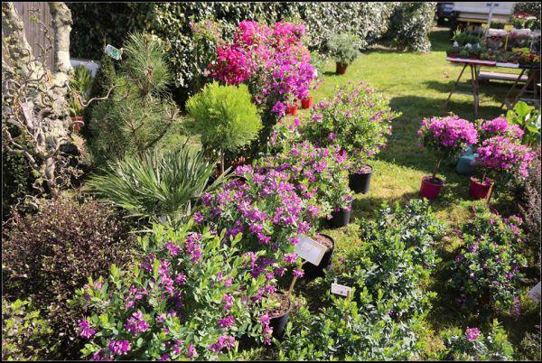 Fête des jardins : le marché du printemps
