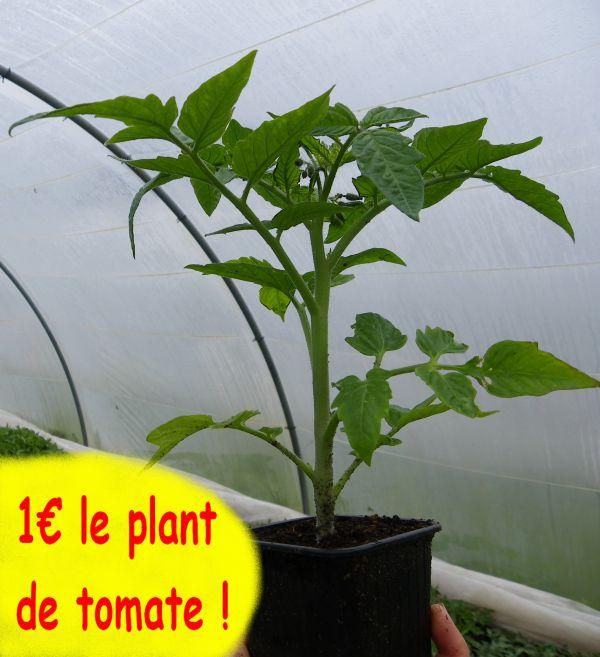 Vente de plants potager, 11ème édition.