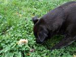 Champignons et animaux domestiques