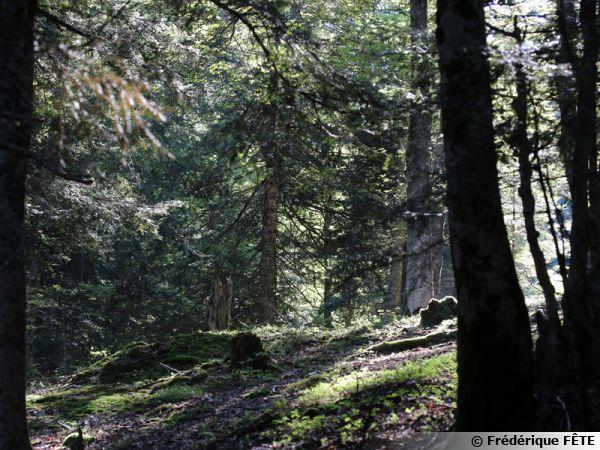 Ce coin de forêt serait-il un coin à champignons... On a envie d'y aller...