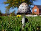 10 champignons incontournables de l'automne