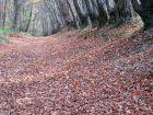 2015/12 Les feuilles mortes se ramassent à la pelle