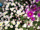 arka, Floraisons d'automne
