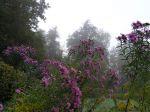 2016/10 Floraisons d'automne