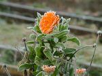 2016/02 Improbables floraisons hivernales