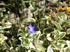 Improbables floraisons hivernales