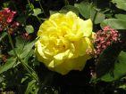 """Photo de Enibas pour le concours """"La vie en Rose"""""""