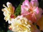 """Photo de GPR pour le concours """"La vie en Rose"""""""