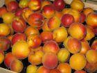 Quand récolter les fruits de l'été?